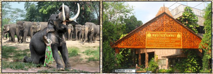 Source: http://www.elephant-village-pattaya.com