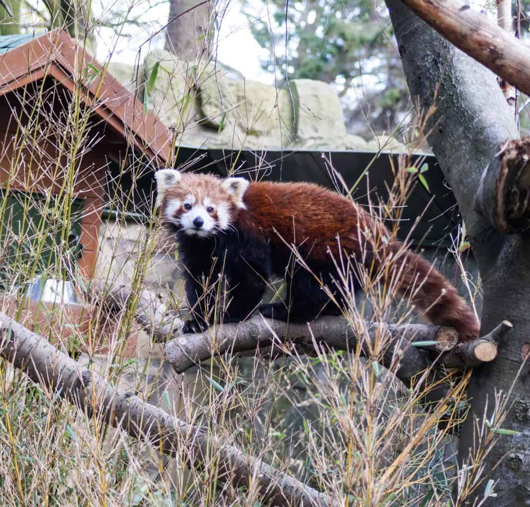 10 absolutely best attractions in Edinburgh, Scotland - Edinburgh Zoo