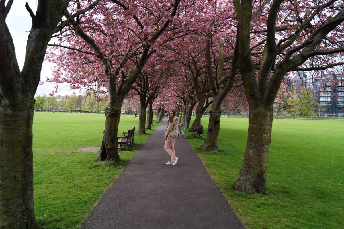 The ultimate guide to Edinburgh, Scotland: Edinburgh travel tips - Meadows Cherry Blossom