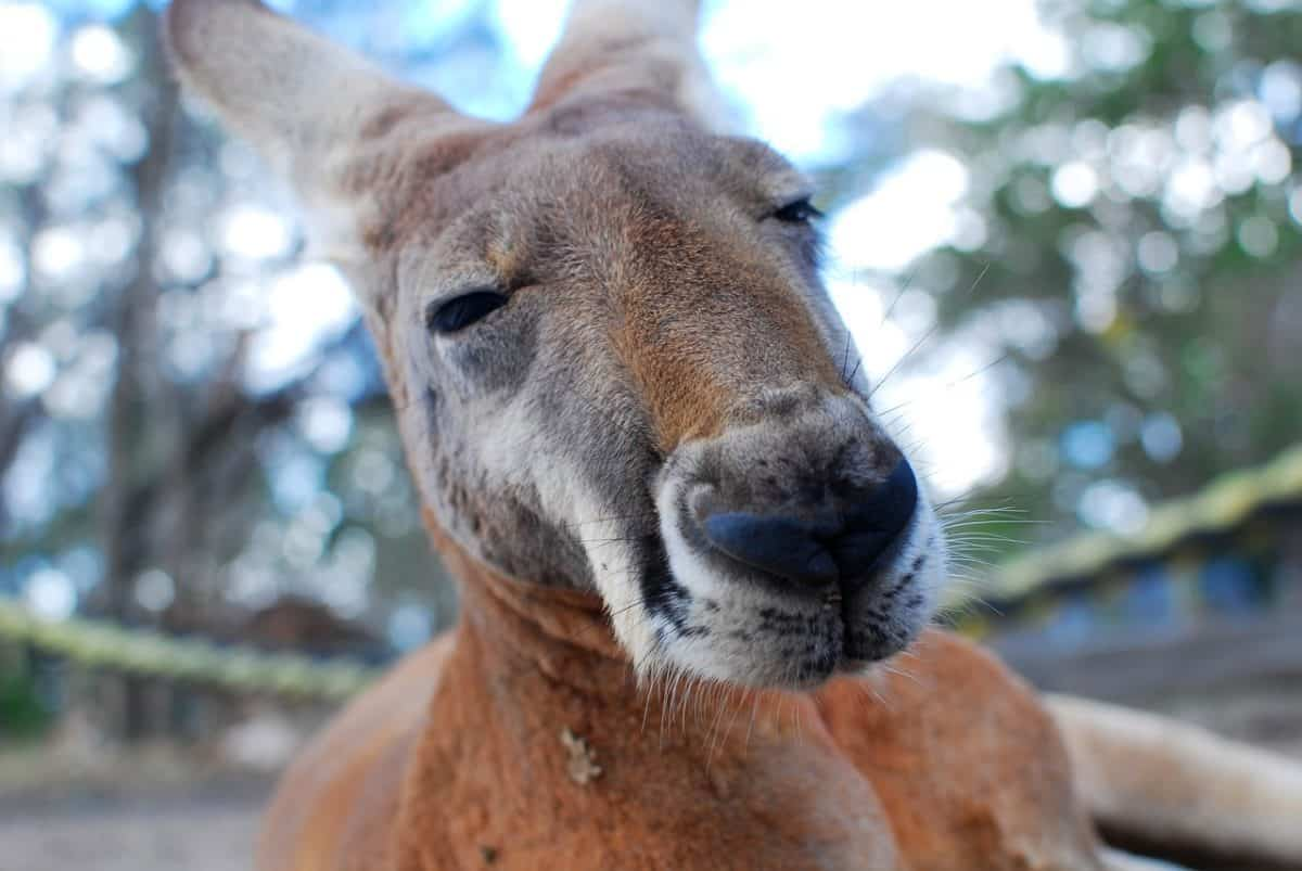 My Australia bucket list: kangaroos, koalas and a few road trips