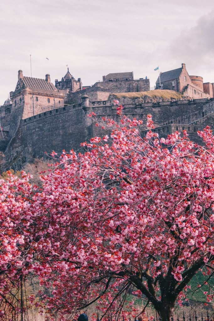 Cherry Blossom in Edinburgh. Edinburgh Castle