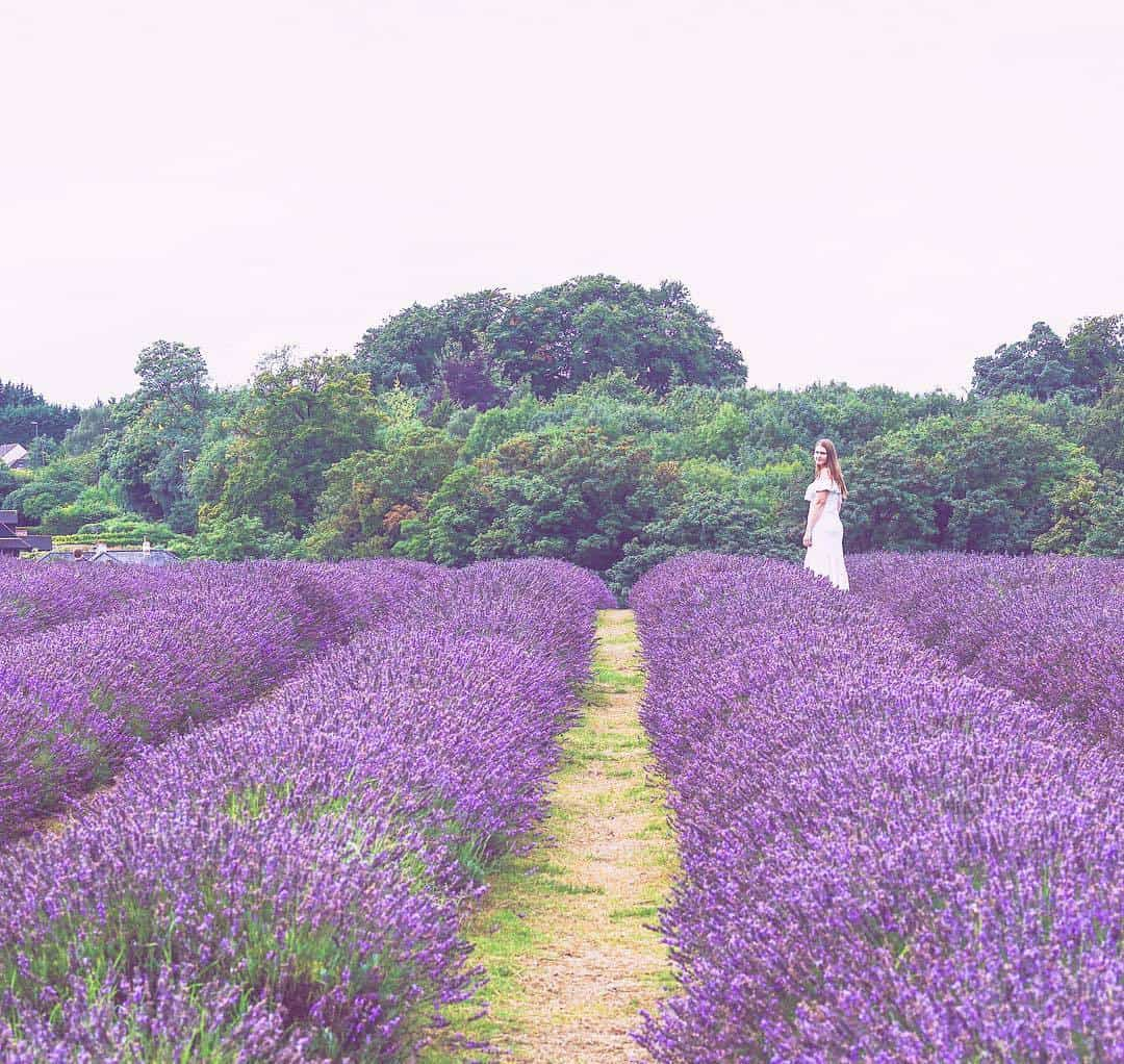 Most Instagrammable places in England - Mayfield Lavender