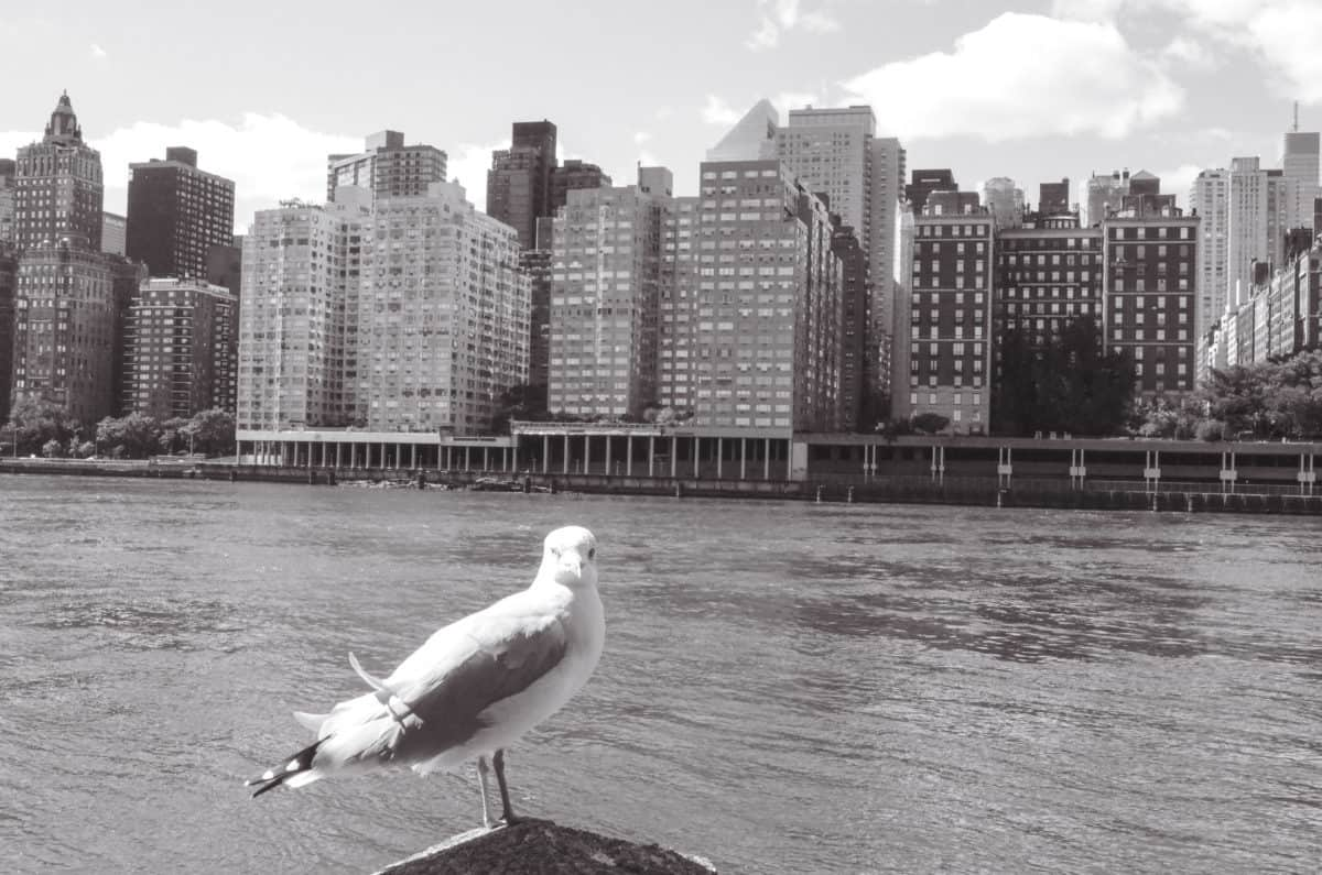 Instagram guide to New York City