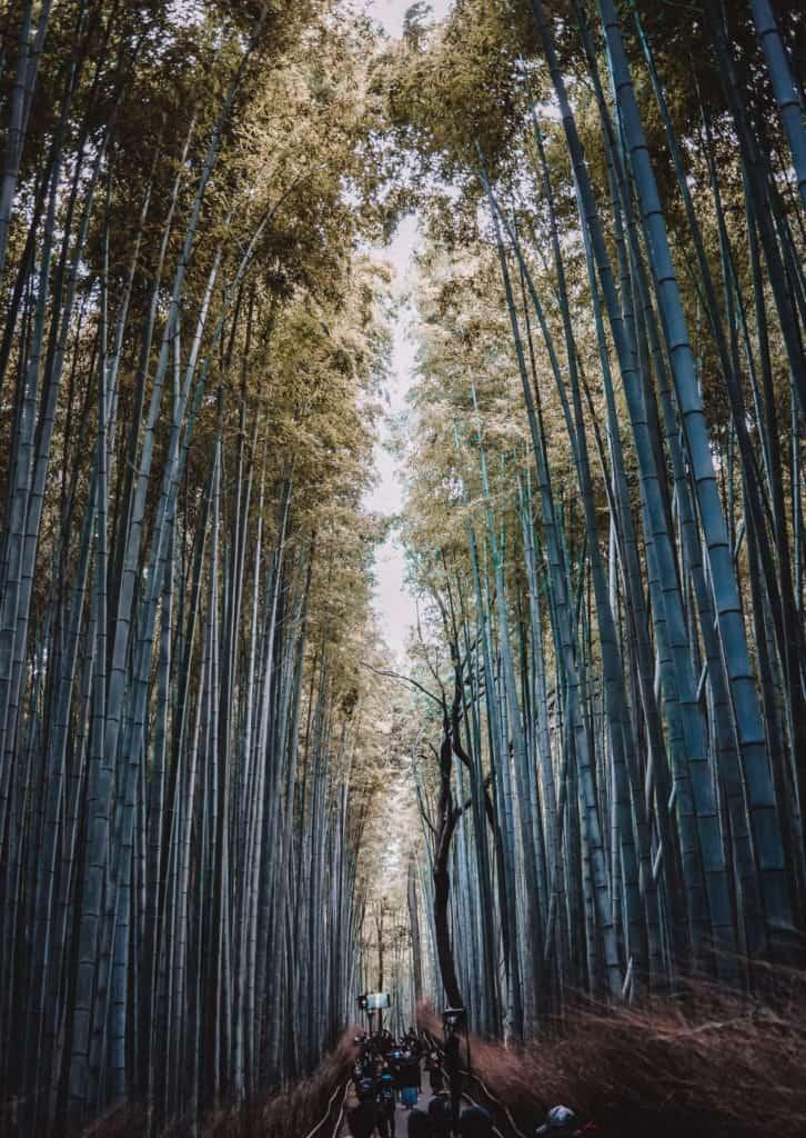 Our 7-day express itinerary for Japan: Tokyo, Hakone, Kyoto, Miyajima, Osaka (Rdy)
