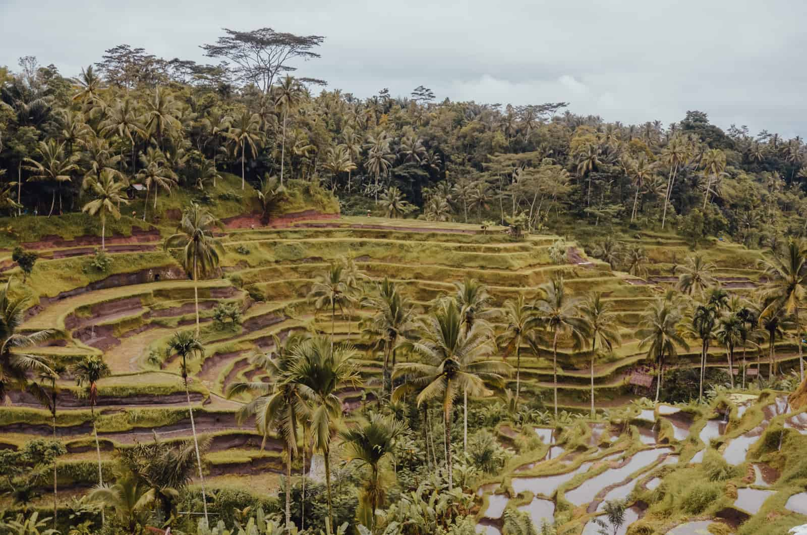 Is Bali worth the hype? My trip to Bali in December: a week of rain!