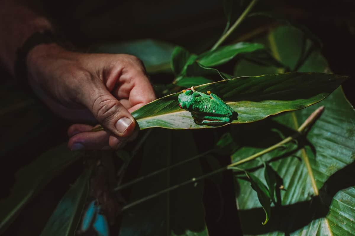 Manuel Antonio at night - jungle tour
