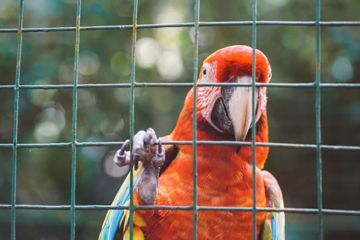 Impressive wildlife in Costa Rica