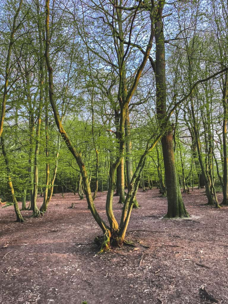 Ancient woods of Haringey - Coldfall wood