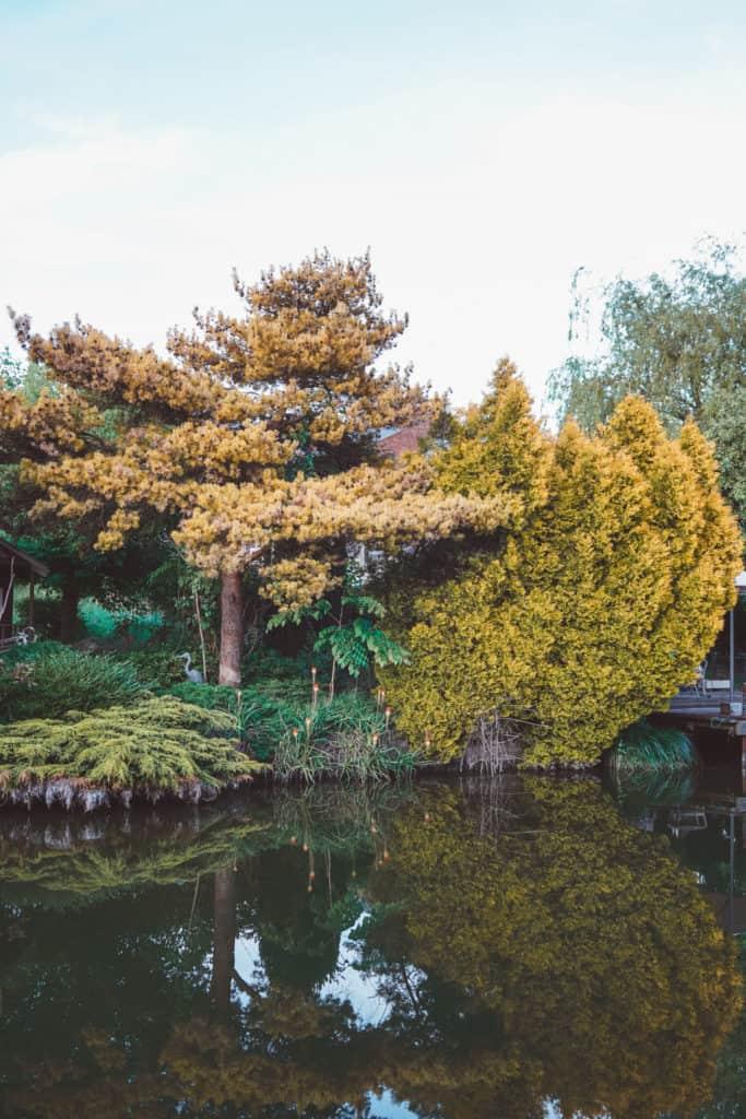 Chilterns AONB Circular Walk: Ashridge Forest, Bluebells & Union Canal