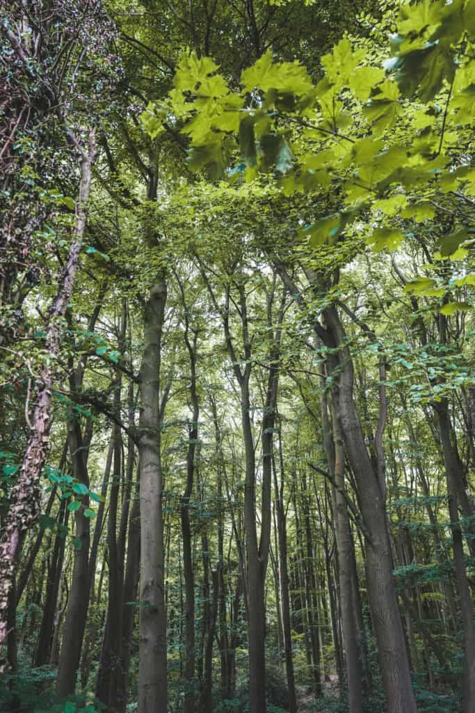 Chesham Bois. Chesham circular walk