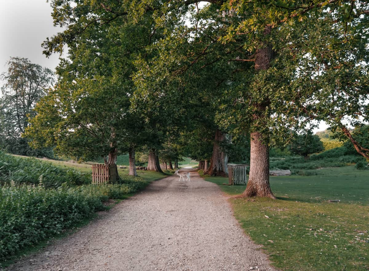 the most scenic circular day walk near London: Sevenoaks, Knole Deer Park and Ightham Mote