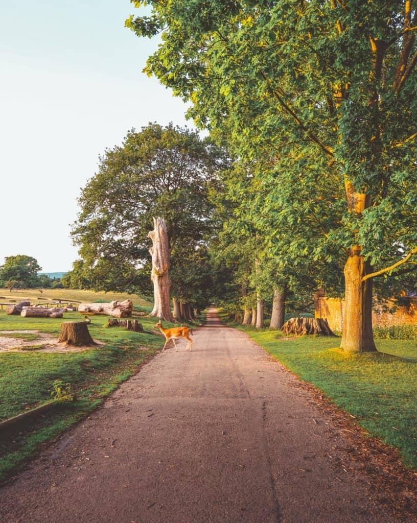 Knole Deer Park and Estate - circular walk