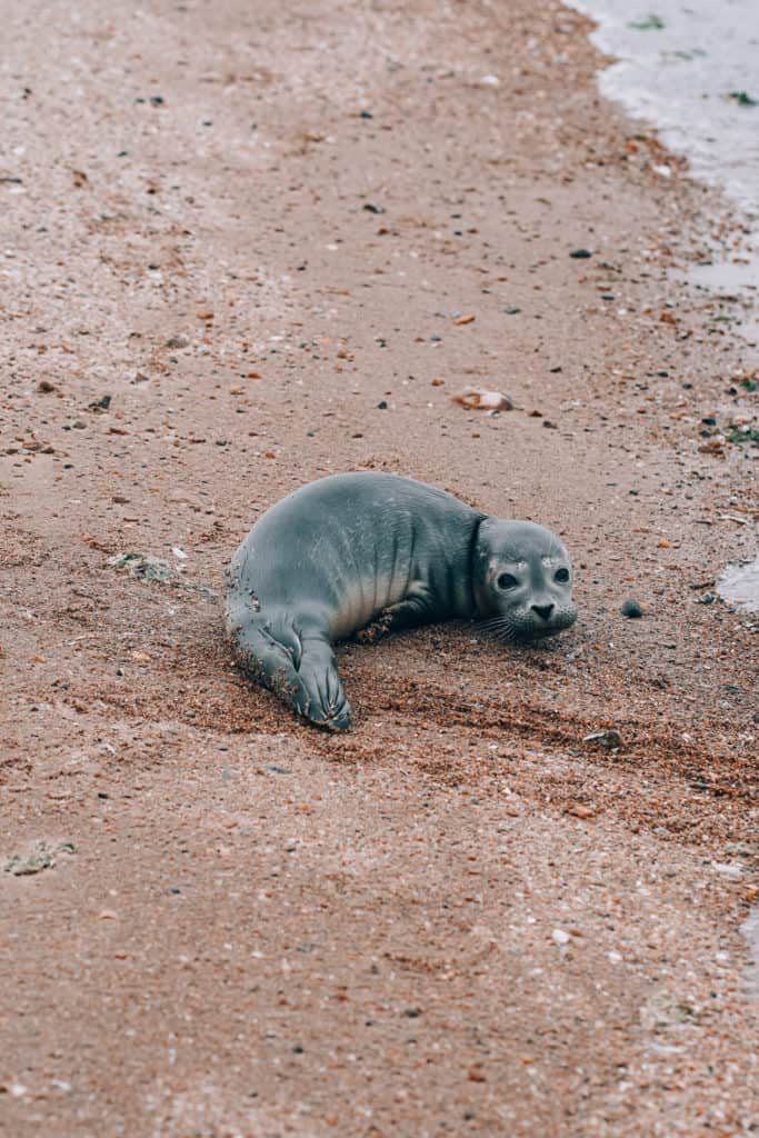 where to see seals in the UK