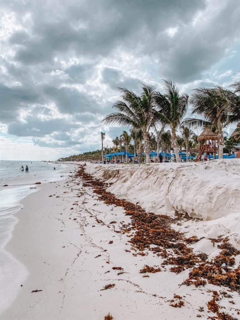 Seaweed in Playa del Carmen