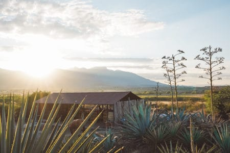 Mexico Road Trip Itinerary: Mexico City, Puebla and Oaxaca in 1 week